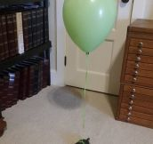 How To Keep Track Of A Turtle