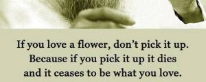 If You Really Love A Flower