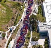 2600 People Form A Chain To Celebrate The Anniversary Of DNA