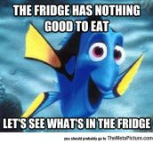 I Just Realized I'm Basically Dory