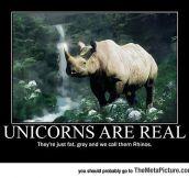 Truth About Unicorns