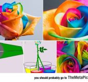 How To Easily Make Colorful Roses