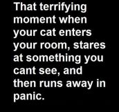 Terrifying Moment