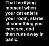 Terrifying Moment