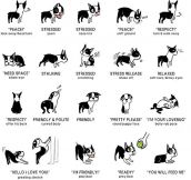 The Language Of A Dog