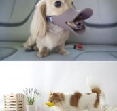 Duck-Billed Protective Muzzle For Dogs