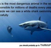 Most Dangerous Animal In The World