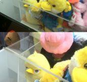 Evil Plotting Duck Planning His Revenge