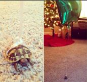 Clever Way To Keep Track Of Where Your Tortoise Is
