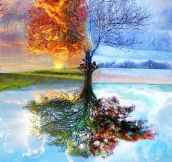 One Old Tree, Four Seasons