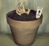 Grow Your Very Own Zombie