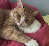 Fake Kitten Love