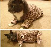 Kitty Pajamas