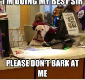 Please Sir, Be A Good Boy