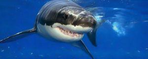 Friendly Self-Esteem Shark