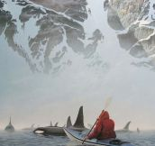 Canoeing With Orca Whales
