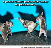 Sassy Bats