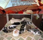 Book Lovers Will Never Be Alone