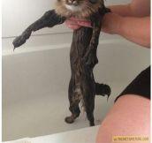 Shrinking Your Cat