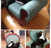 Kitten-Sized Chair