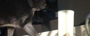 Shady Cat That Likes Knives