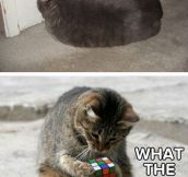 Some Cats Get Easily Amazed