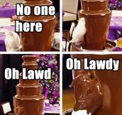When A Bird Finds A Chocolate Fountain