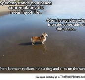 Spencer The Philosopher Corgi