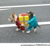 I Wish I Was A Dog Just So I Could Wear This Ridiculously Cool Costume