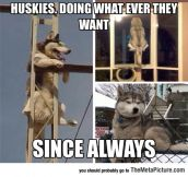 Truth About Huskies