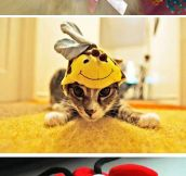 Felines Wearing Animal Hats
