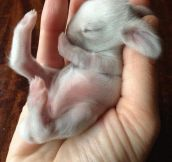 Sleepy Newborn Bunny