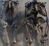 Humans Vs. Apes