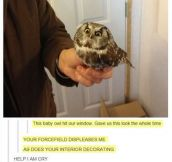 Owl Is Displeased
