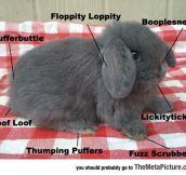 The Complex Anatomy Of A Bunny