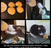 Tiny Rat-Sized Pancakes