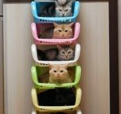 Crazy Cat Lazy Storage Unit