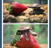 Turtle Investigator