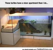These Turtles Are Living The Life