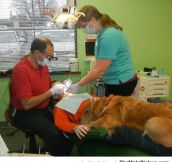 Dog Helps Boy Get Over His Fear At The Dentist