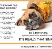 I'm Not An 'Until' Dog