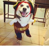 How A Three Legged Dog Celebrated Halloween
