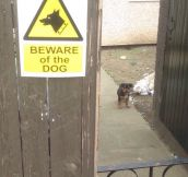 Beware Of The Canine