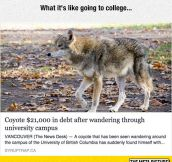 Going To College These Days