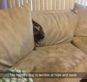 Terrible At Hide And Seek