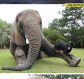 The Elephant Who Became Best Friends With A Dog