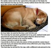 Why Dogs Are Better Than Humans