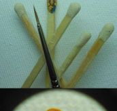 Magnificent Miniature Artist Hasan Kale
