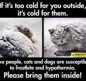 Something To Remember During The Cold Weather