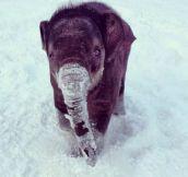 Tiny Elephant In The Snow
